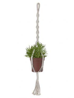 Lily Plant Hanger & Pot Holder