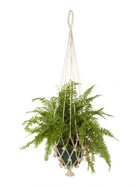 Vibhav (set of 4) Plant Hanger & Pot Holder